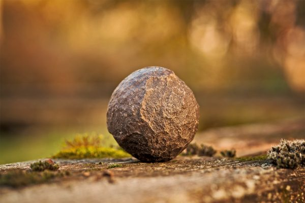 12. Your PET rOCK of Control