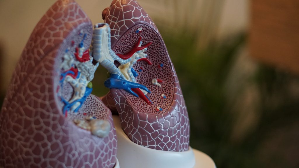 1. Organ of the week: The lungs.