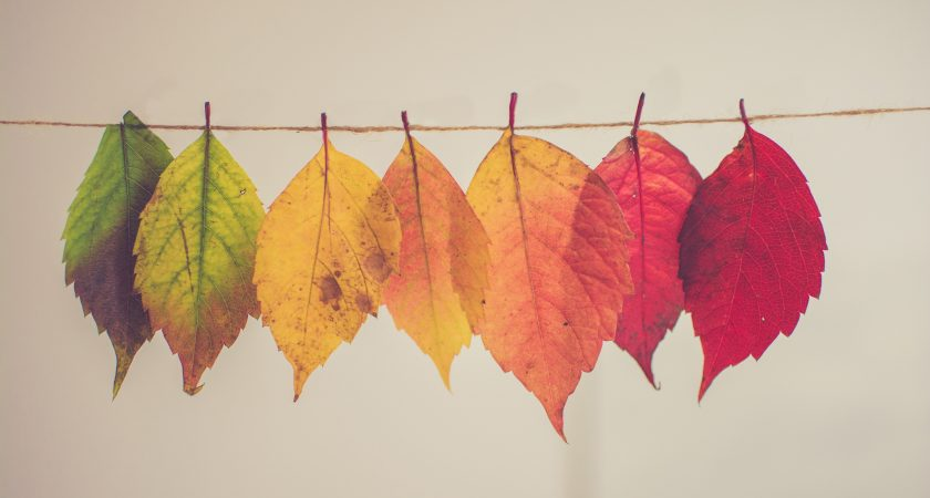 7. Life Settings and Life Seasons